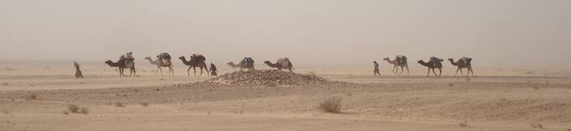 sand_storm_camels_resized